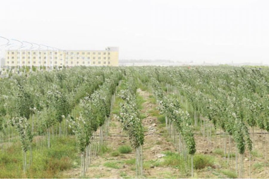Desert greening cases